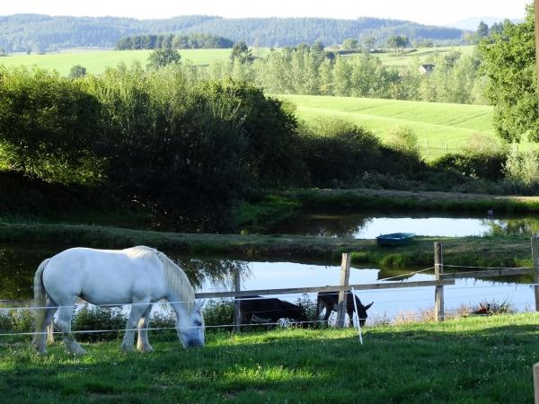 étangs chevaux